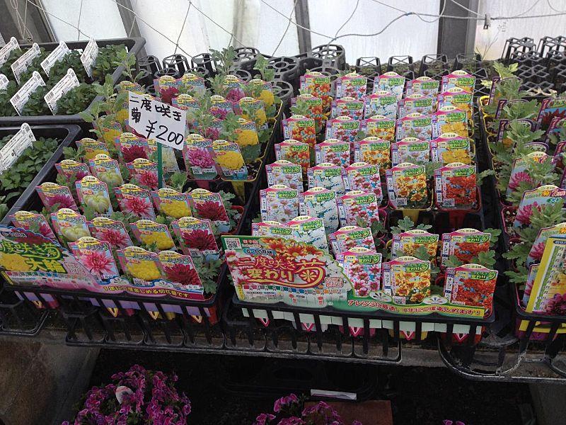季節の花各種入荷中