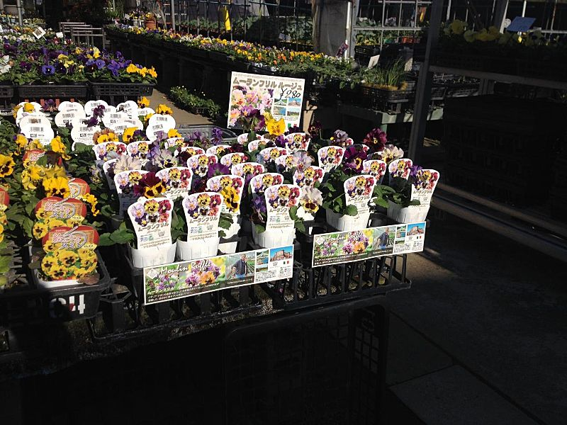 今月の季節の花