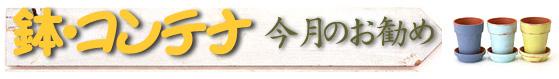鉢・コンテナ 今月のお勧め